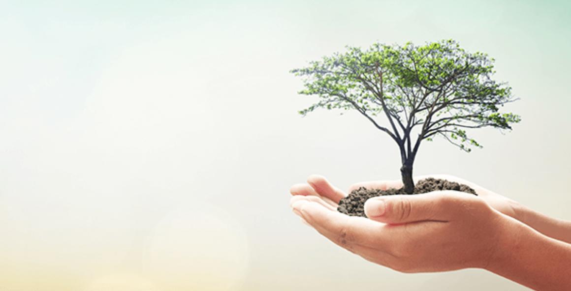 手のひらに乗る小さな木